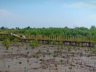 Nelayan Karawang Tanam 92 Pohon Mangrove di 20 Hektare Lahan di Pantai Pasput