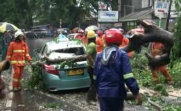 Pohon Tumbang Timpa Taksi di Jalan Haji Nawi Jaksel Akibat Hujan Deras
