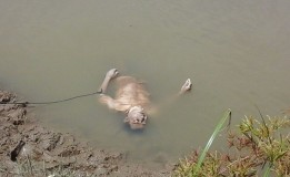 Pemuda yang Tewas di Sungai Lamong Diduga Bukan Akibat Bunuh Diri